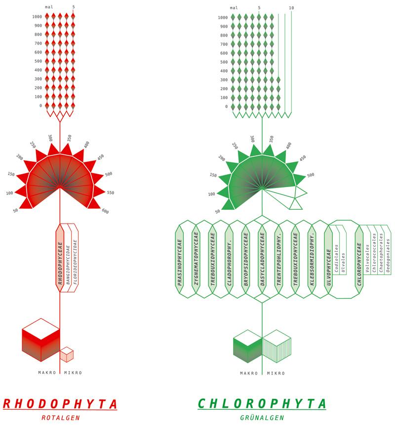 113_taxonomiedetail